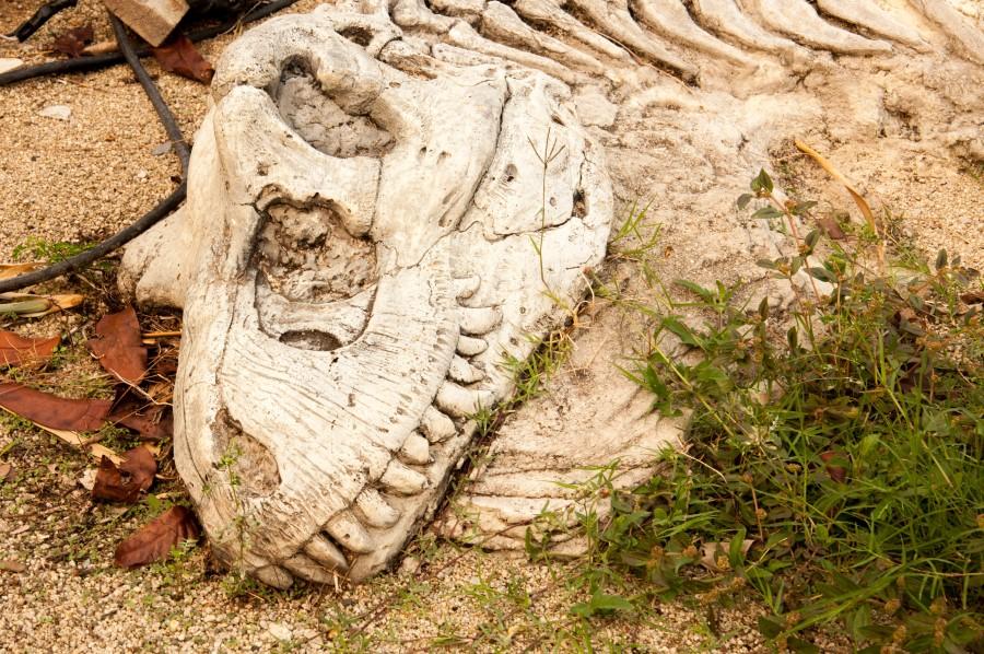 First_Dinosaur_Bone_head_xl_39421424_(Custom)
